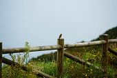 picture of bird fence  - Wide view of sea from mountain hill, sea view taken from a high position, sparrow bird seated on wooden fence