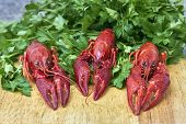 stock photo of craw  - Red river crayfish on green parsley on wooden cutting board in front perspective close - JPG