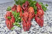 picture of craw  - Red river crayfish on green parsley on kitchen grey granite worktop in front perspective close - JPG