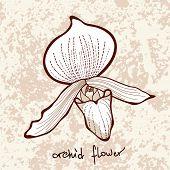 Stylish orchid flower on grunge background