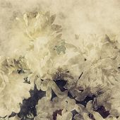 art grunge floral warm sepia vintage paper textured background with white asters