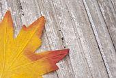Fall Leaves On Rustic Wood