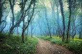 stock photo of spooky  - Mysterious forest with fog in spring  - JPG
