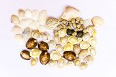 Various objects like varied shaped sea shells, necklace beads and Indian ankle bracelet beads