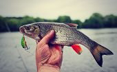 image of chub  - Chub caught on plastic lure against water and sky - JPG