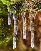 Frozen Water Drops