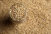 stock photo of malt  - Beer glass full of barley malt standing on malt grains - JPG
