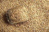pic of malt  - Whiskey tumbler glass with malt grains on a layer of malt - JPG