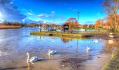 River Stour Christchurch Dorset England UK with swans swimming on a calm peaceful day like painting