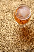 picture of malt  - Glass full of light beer standing on barley malt grains - JPG