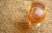 foto of malt  - Glass full of light beer standing on barley malt grains - JPG