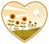 Sunflowers In Heart