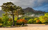 pic of seoraksan  - famous pair pines in the morning light  - JPG
