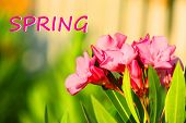 Beautiful flowers outdoors. Hello Spring concept