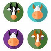 stock photo of cow head  - Vector illustration of flat cow - JPG