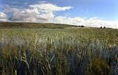 Islay Loch Finlaggan
