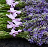 stock photo of lavender plant  - Rural harvest of lavender flowers. Multiple fresh lavender bunches on the wooden stock