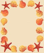 pic of echinoderms  - Bright frame of starfish and sea shells on sand background - JPG