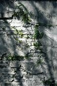 pic of weed  - Background of old rustic white wall in the shade covered with moss and weeds - JPG