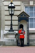 picture of beefeater  - queen - JPG