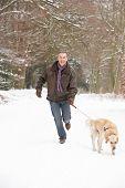 Постер, плакат: Старший мужчина ходьба собаки через снежное Woodland