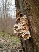 Mushroom A Tinder Fungus