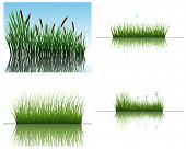 Vector grass silhouettes backgrounds set with reflection in water. All objects are separated.