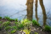 Fragment Of A Shore Of The Ramenka Rivulet. Energizing Sunlight On The Young Spring Grass. Nature Is poster