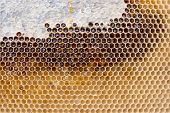 Close Up View Of Honeycomb With Honey As Background.. poster