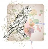 Sketch of a canary bird sitting on a branch & floral calligraphy ornament - a stylized orchid,  color paint background. Bitmap copy my vector ID 70185769