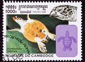 Canceled Cambodian Postage Stamp Swimming Hawksbill Sea Turtle, Eretmochelys Imbricata