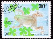 Canceled Laotian Postage Stamp Swimming Frog Muller's Platanna, Xenopus Muelleri
