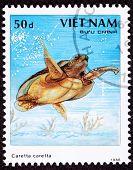 Canceled Vietnamese Postage Stamp Loggerhead Sea Turtle, Caretta Caretta- Bottom