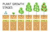 Tree Growth Stages Infographics. Line Art Icons. Planting Instruction Template. Linear Style Illustr poster