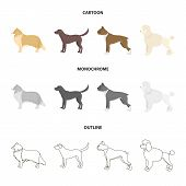 Collie, Labrador, Boxer, Poodle. Dog Breeds Set Collection Icons In Cartoon, Outline, Monochrome Sty poster