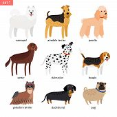 Dog Breeds. Vector Cartoon Dog Collection With Dalmatian And Beagle, Yorkshire Terrier And Dachshund poster