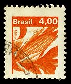 BRAZIL-CIRCA 1980:A stamp printed in Brazil shows image of Maize known in many English-speaking coun
