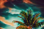 Coco Palm Tree On Sunset Sky Digital Illustration. Green Red Tropical Vacation Banner Template With  poster