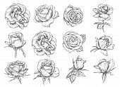 Roses Flowers Sketch Icons. Vector Isolated Set Of Botanical Sketch Rose Blossoms And Blooming Petal poster