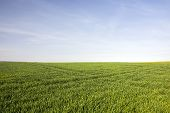 Green Fresh Grass, Horizon And Blue Sky. poster