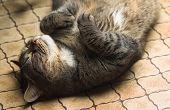 Funny Cat Lying