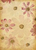 vintage paper textures. cosmea