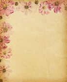 vintage  paper textures with  cosmea