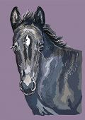 Colorful Cute Pony Foal Portrait. Young Pony Head Isolated On Purple Background. Vector Hand Drawing poster
