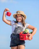 Harvest Season. Girl Adorable Child Farming. Kid Work At Farm. Child Carry Harvest. Buy Organic Food poster