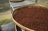 Red Or Brown Peppercorns Drying In Drying Room Or Box On Plates Of Reed On Black Pepper Plantation.  poster