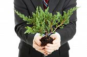 Businessman, unafraid to get his hands dirty, holding a bonsai tree.  Symbolizes the union of ecolog