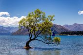 Lonely Tree In A Lake And A Yacht In Wanaka, New Zealand poster
