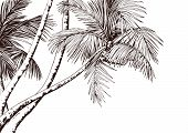 Tropical Card With Sketchy Palm Trees. Hand Drawn Vector Illustration. poster