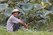 vietnamesische Bauer